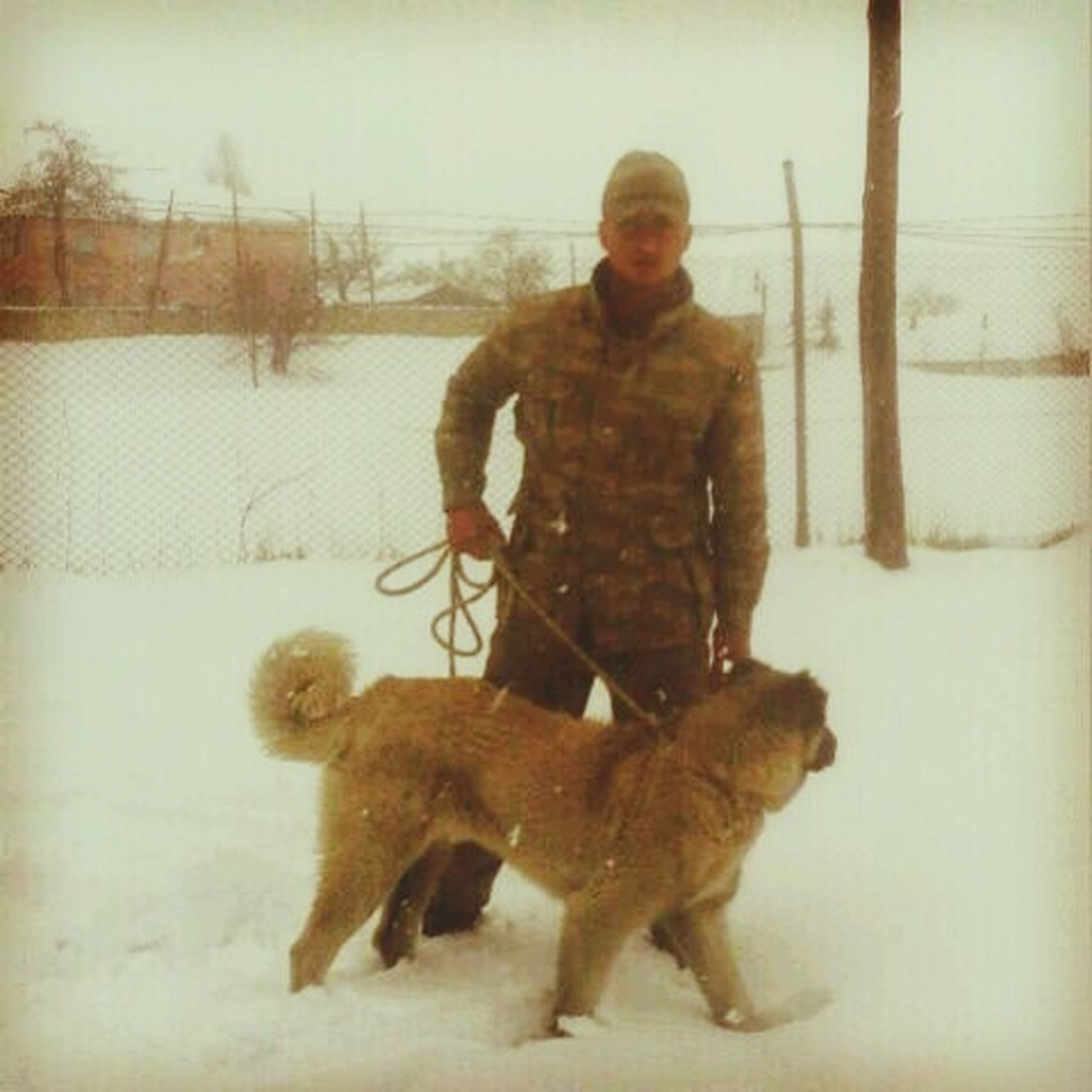 animal themes, domestic animals, mammal, full length, winter, pets, snow, dog, one animal, cold temperature, season, two animals, togetherness, field, childhood, standing, playful, playing, weather