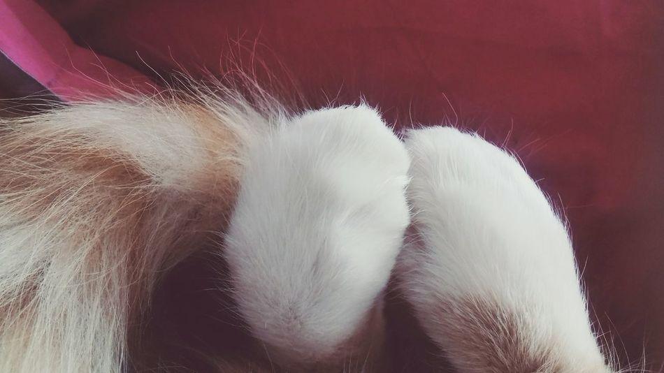 Cat♡ Patines First Eyeem Photo