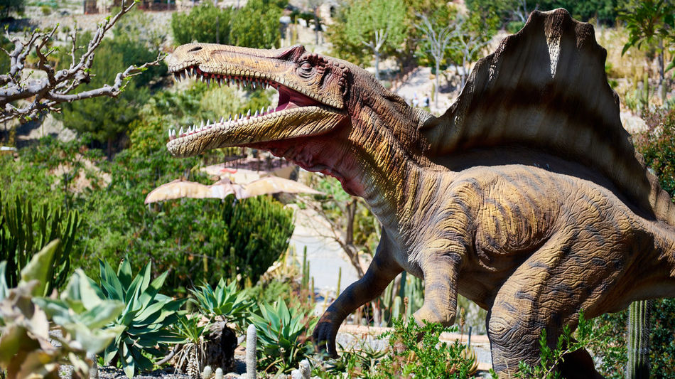 Algar, Spain - April 8, 2017: Realistic model of a Spinosaurus in the Dino Park of Algar. It is a unique entertainment and educational park. Spain älgar Amusement Park Animal Themes Animals Animals In The Wild Carnivorous Creature Dangerous Dino Dino Park DinoPark Dinosaur Entertainment Park Extinct Extinction Hazardous Jurassic Period No People Outdoors Paleontology Realistic Model Reptile SPAIN Spinosaurus Sunny Day