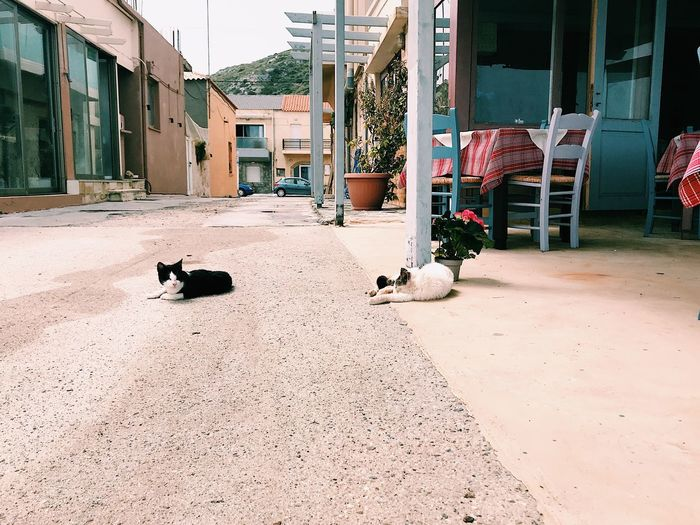 Two cats laying on the street by a restaurant in Greece Village Village View Village Life Pets Cats Exterior Building Animal Wildlife Laying Down Relaxation Relaxed Moments Relaxing Moments Relaxed Street Ground Building Exterior Built Structure Architecture Animal Themes Animal Domestic Animals Pets Mammal Nature Feline Domestic Cat Domestic No People Vertebrate Day Building