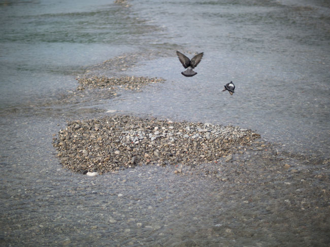Animal Behavior Animal Themes Animals In The Wild Avian Beach Beauty In Nature Bird Flying Nature No People Outdoors Sand Sea Seagull Shore Spread Wings Swimming Tranquility Water Water Bird Wave Wildlife Zoology