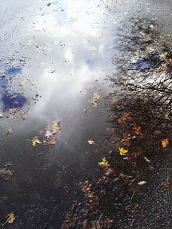 ich liebe pfützen;) Puddleography Puddle Reflections PuddleWonderful Autumn🍁🍁🍁 Tree And Sky Fallen Leaves