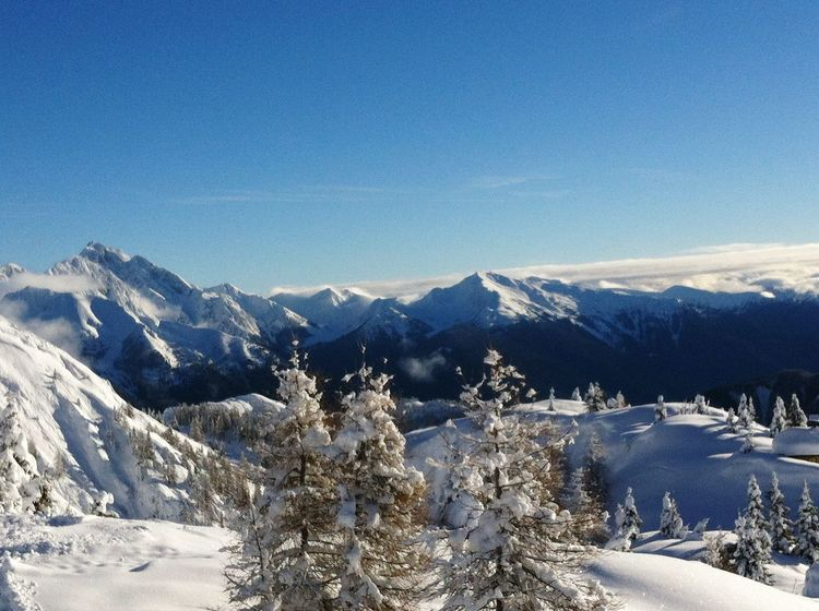 Winterwonderland Snow Cold Temperature Winter Mountain Snowcapped Mountain Nature Pinaceae No People Landscape Day Frost White Color Polar Climate Blue Sappada Italy Skiing 🎿 Shades Of Winter The Great Outdoors - 2018 EyeEm Awards