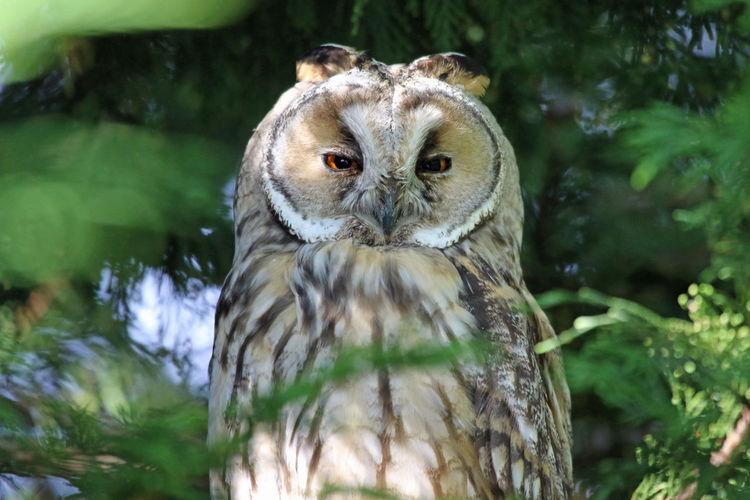 Close-up portrait of an owl