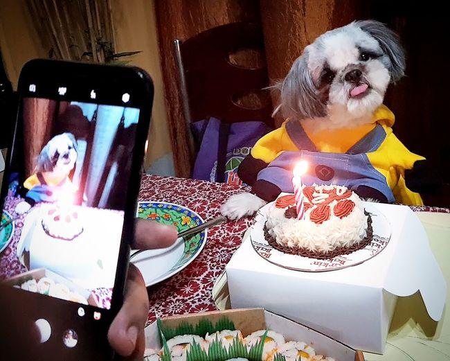 baby love 🐶 Shih Tzu Dog Furbaby Love Animal Photography Birthday Celebration Life Baby Photography Happiness Adult Indoors  Communication Candle People Birthday Cake Indulgence