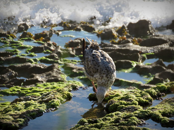 Seagull foraging at mossy sea shore