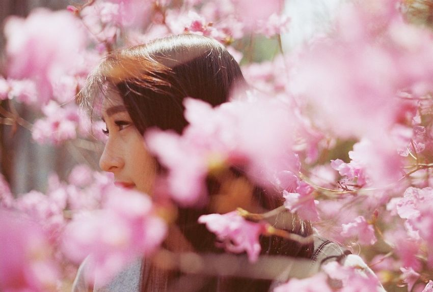 TCPM EyeEm Best Shots Flower Pink Color Blossom Springtime Outdoors Beauty In Nature Nature Eyeemphotography Nikonphotography Film Photography Filmphoto Film NoEditNoFilter Analog Analogue Photography Eyeemgallery Filmcamera Filmisnotdead Filmphotography EyeEm Beauty In Nature Spring Portrait