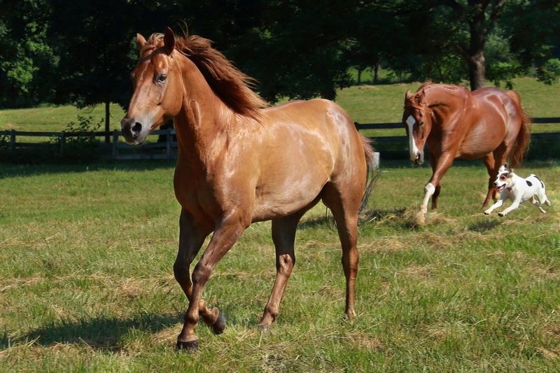 Two horses and