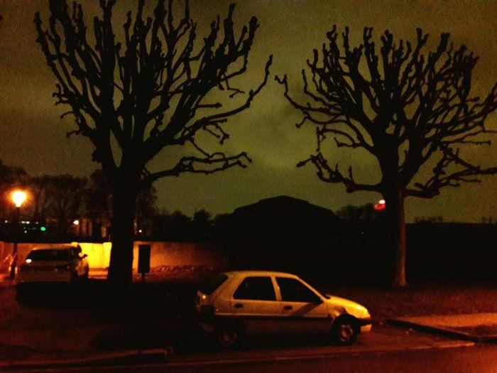 Car Night Tree Transportation Illuminated Bare Tree Road