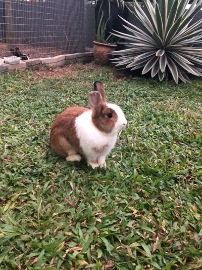 Rabbit - Animal