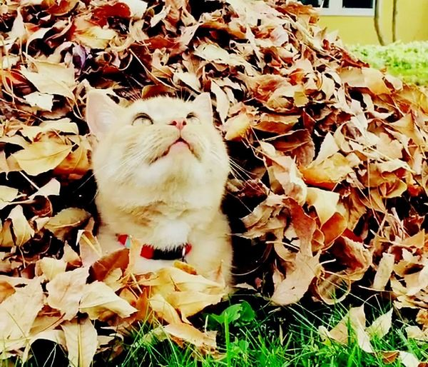 EyeEm Selects Beauty In Nature Domestic Cat Pets Domestic Animals Animal Themes One Animal Leaf Mammal Autumn No People Feline Day Whisker Outdoors Nature Close-up