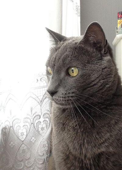 Selfis du chat Chat Animal Eye4photography  EyeEm Cat♡ Animals Chats Animaux Cat Popular Photos