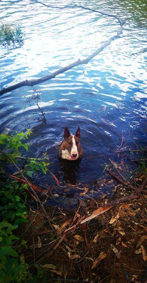 Adogslive Funinthewater Animalchildren