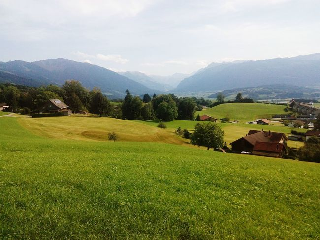 Agriculture Field Farm Rural Scene Crop  Landscape Mountain Nature Scenics Outdoors No People Tree Wine Mountain Range Growth Beauty In Nature Day Irrigation Equipment Sky Alpessuisses Switzerland Alps Switzerland