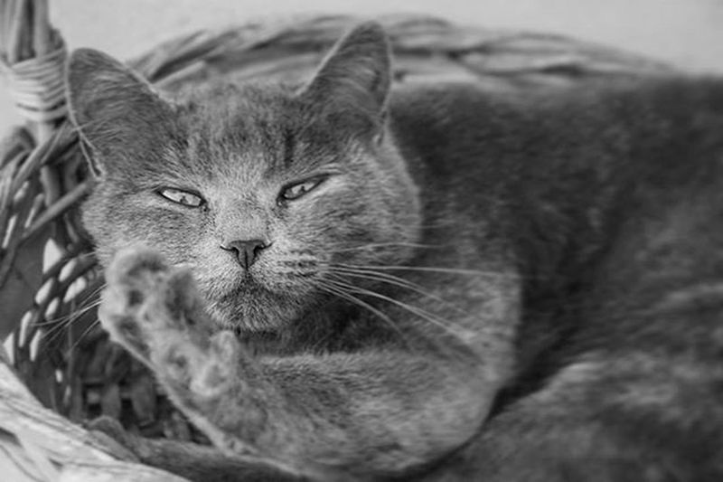 Cat Canon_photos Animal Animals Animalsofinstagram Animallovers Tamron Canonphotography Canon1100d Canon18135mm Emanuele_salvons Cats Catphotography