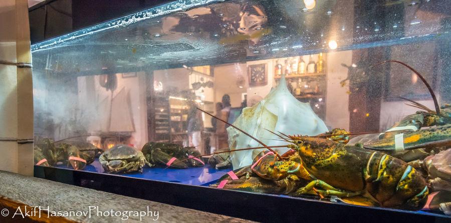 La Peniche Belgium, Wavre Aquarium Food Food And Drink Indoors  Night Restorant