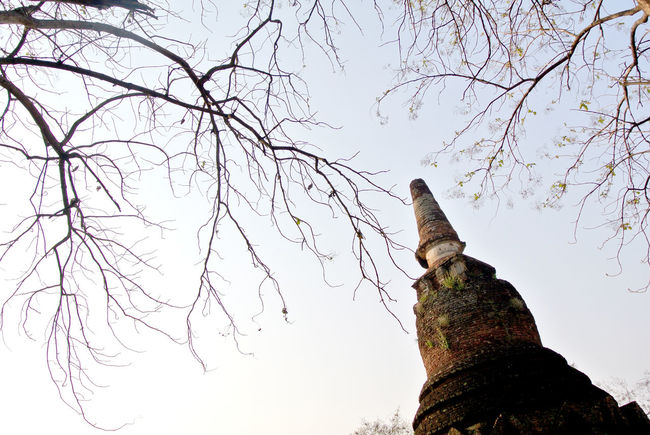 Branch Historic Park Kamphaengphet Low Angle View No People Old Pagoda Pagoda Temple Tree
