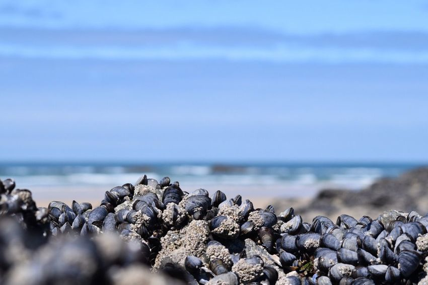 Water Sea Beach Rock Sky Beauty In Nature Land Tranquility Rock - Object Tranquil Scene Selective Focus Scenics - Nature No People Nature Horizon Over Water Pebble