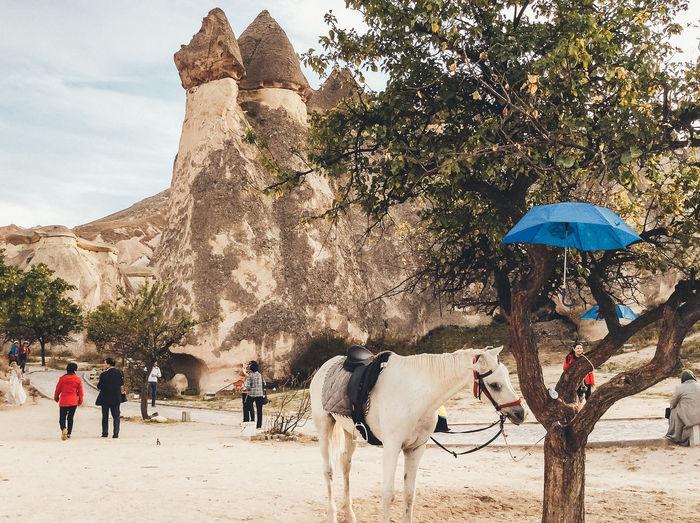 Animals In The Wild Animal Turkey Middle East Cappadocia Horse Mushroom Rock Travel Fujifilm