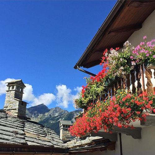 Rise and shine ☀️🌲🌹🌸🌷 Courmayeur Sunnysunday Weekend Flowers Beauty