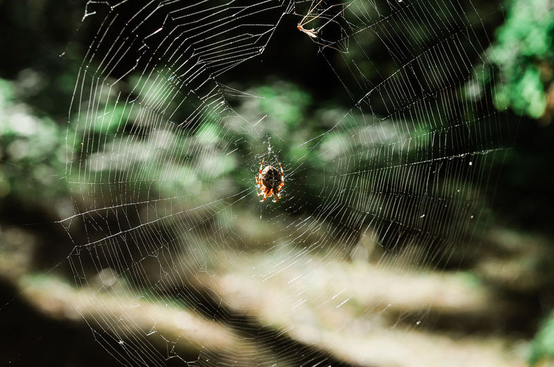 Animal Animal Leg Animal Themes Animal Wildlife Animals In The Wild Arachnid Arthropod Close-up Complexity Day Focus On Foreground Fragility Insect Invertebrate Nature No People One Animal Outdoors Poisonous Spider Spider Web Survival Vulnerability  Web Zoology