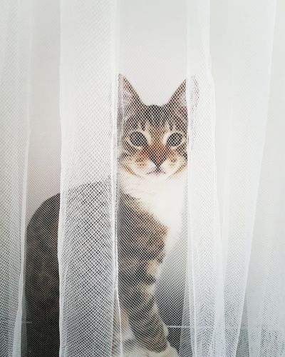 The Portrait Cat Cat Lovers Portrait Feline Cat Home
