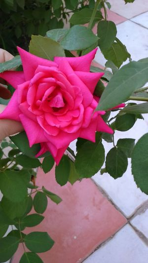 my flower, my