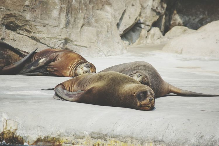 Marine Park Dalian Treavelling