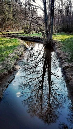 EyeEm Nature Lover Dream Spring Colors Polska Polskajestpiekna A Beautiful Memory Water Tree Reflection Nature Day Sky Outdoors Grass Beauty In Nature