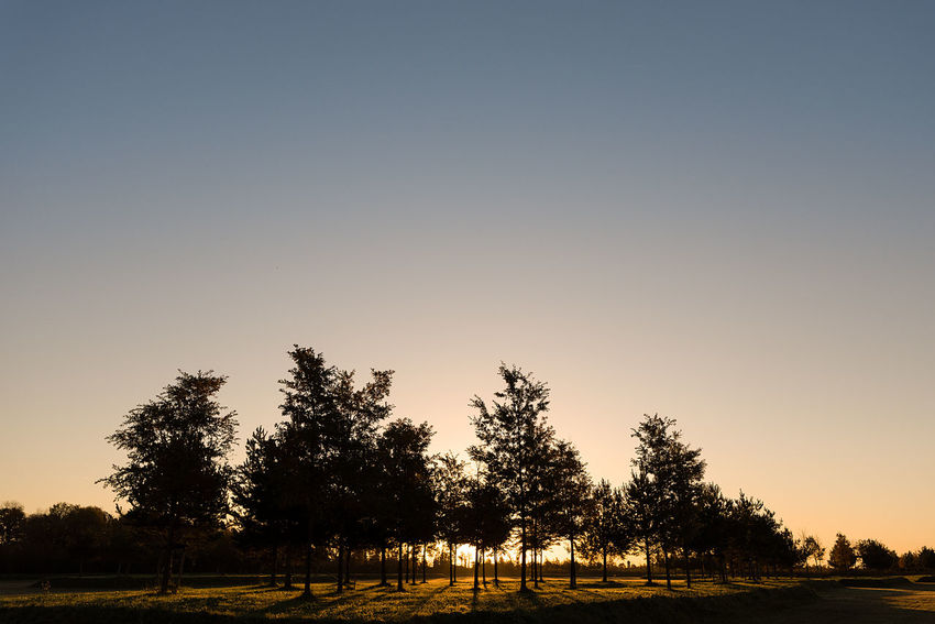 A rising morning sun beaming through a small collection of young trees in a grassy field. Copy Space Grassy Field Sun Rise Sun Up Beauty In Nature Clear Sky Day Landscape Nature No People Outdoors Rural Scene Scenics Sky Sunset Tranquil Scene Tranquility Tree