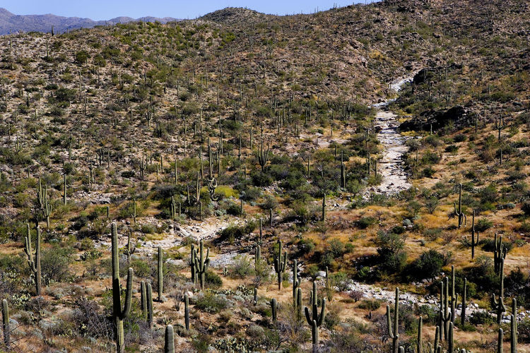 Landscapes With WhiteWall Arizona Desert Tucson, Arizona Cactus Forest WILD WILD WEST The Great Outdoors With Adobe