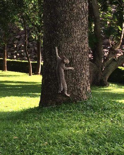 จงทำตัวให้กลมกลืน Tree Nature Green Color Cat Calm Park Paradiseofacat Harmony With Nature Animal