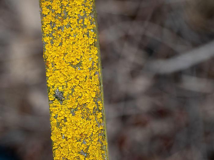 Yellow Plant No