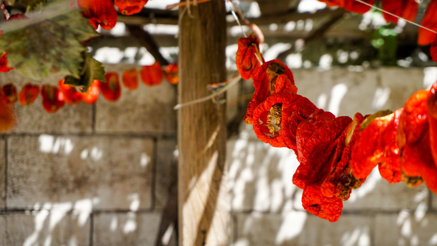 Dried peppers on the rope