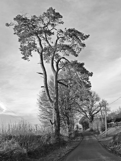 Cloud - Sky Outdoors Tree No People Pixelated Wicklow Road Beauty In Nature Day Sky Nature Ireland Rural Scene Nature Blackandwhite
