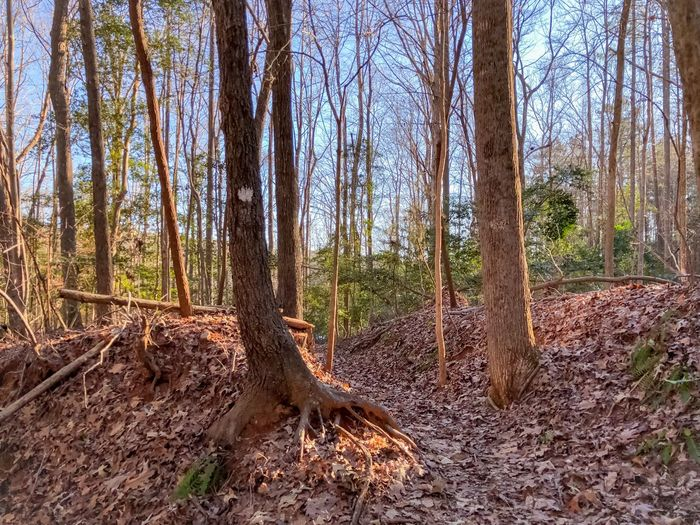 Tree Forest Plant Land Tree Trunk Tranquility Growth Scenics - Nature Nature Non-urban Scene WoodLand Beauty In Nature Tranquil Scene Day No People Landscape Environment Trunk Remote Outdoors