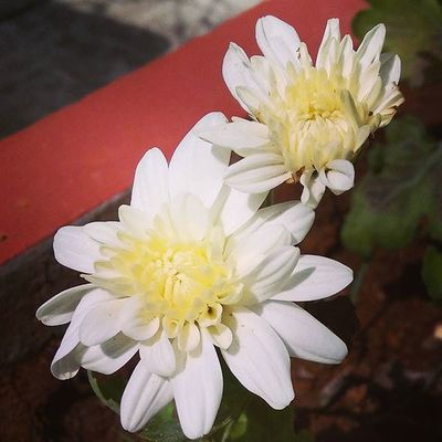 Travel Flower Flowers Ontheroad Sunshine Ontheflowerbed Loveit Coimbatore Beautiful Takeapicture Pleasent Morning