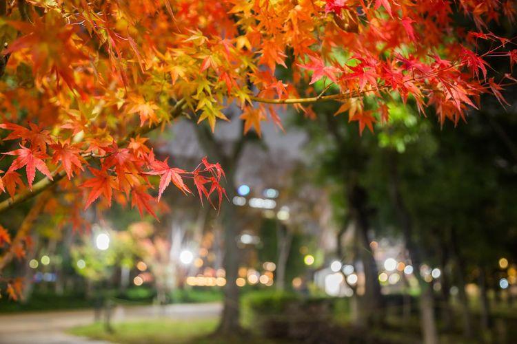 夜の大阪城公園 Night Autumn colors OSAKA Japan Nightphotography Streetphotography Tree Illuminated Multi Colored Beauty Autumn Collection