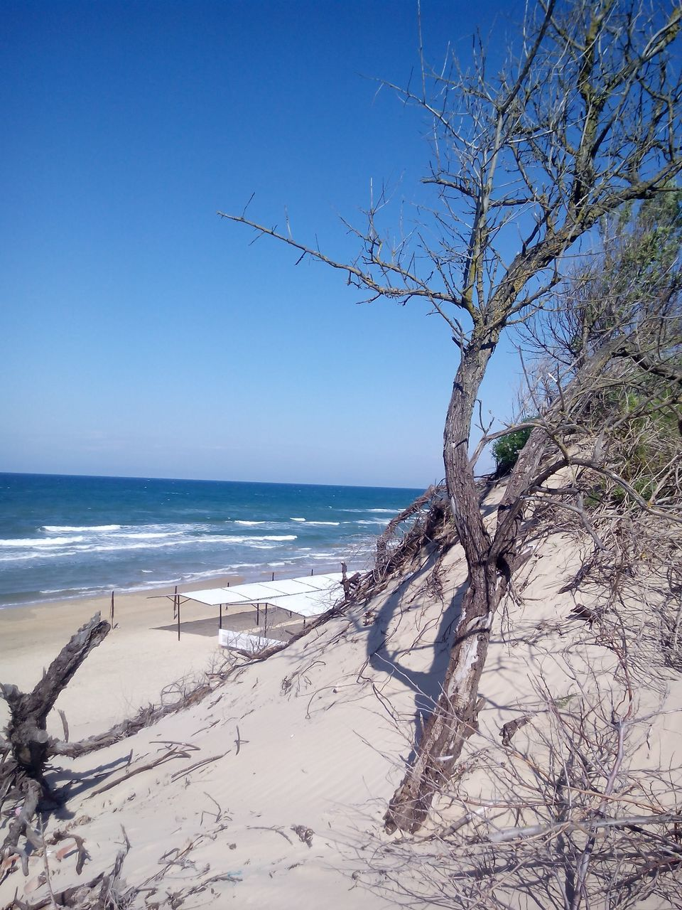 sea, beach, horizon over water, beauty in nature, nature, sand, tranquility, tranquil scene, scenics, bare tree, outdoors, day, water, branch, tree, clear sky, sky, no people