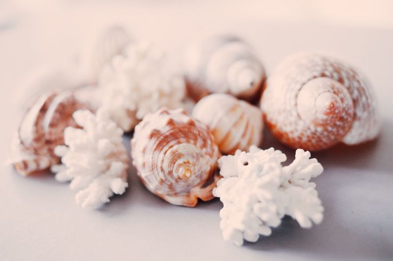 Close-up No People Large Group Of Objects Nature Freshness Shapes In Nature  Shapes Shapes And Forms Fragility Memories Material Table Beach Beauty In Nature Still Life Photography Still Life Shells Collection Indoors  Background Beauty In Nature Shapes And Lines Nutshell Indoors  Day