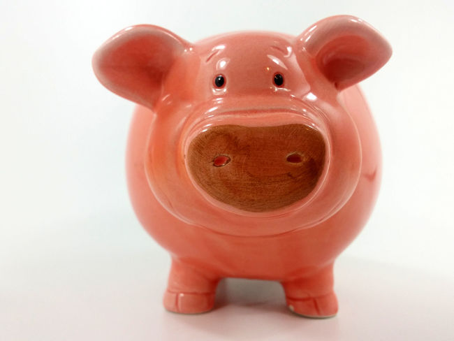 Animal Representation Blick In Die Kamera Close-up Finance Indoors  Investment Isolated White Background No People Pig Pig Face Pig Head Piggy Bank Piggybank Rosa Savings Single Object Spardose Sparschwein Studio Shot White Background