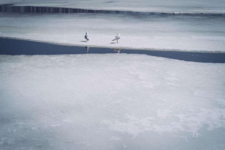 Birds on frozen lake