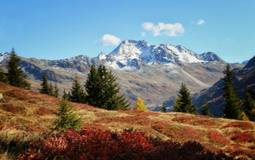 Mountain Scenics Autumn Nature Mountain Range Beauty In Nature Landscape Day Tree Outdoors Tranquil Scene No People Tranquility Travel Destinations Wilderness Snow Forest Snowcapped Mountain Vacations Pinaceae Autmn View Nature Is Art Nature_ Collection  Autmn Landscape Wanderlust