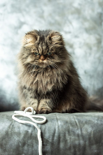Close-up of cat sitting on sofa