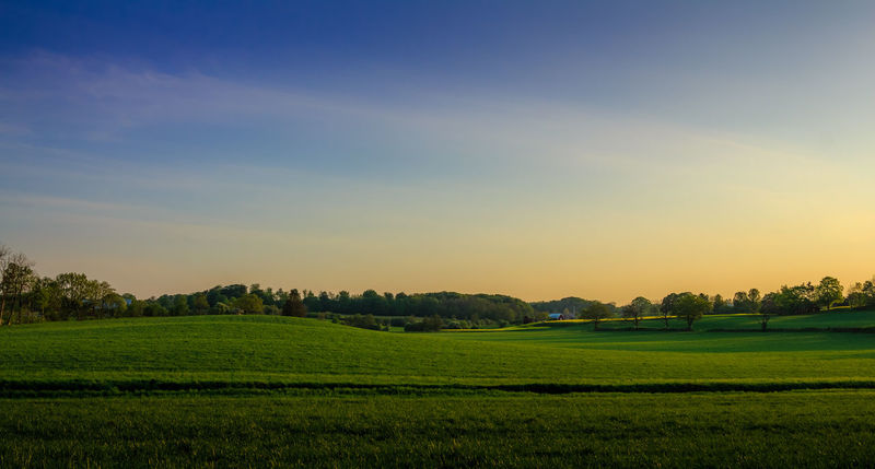Morning in the countryside. Agriculture Beauty In Nature Clear Sky Day Field Grass Landscape Nature No People Outdoors Rural Scene Scenics Sky Tranquil Scene Tranquility Tree