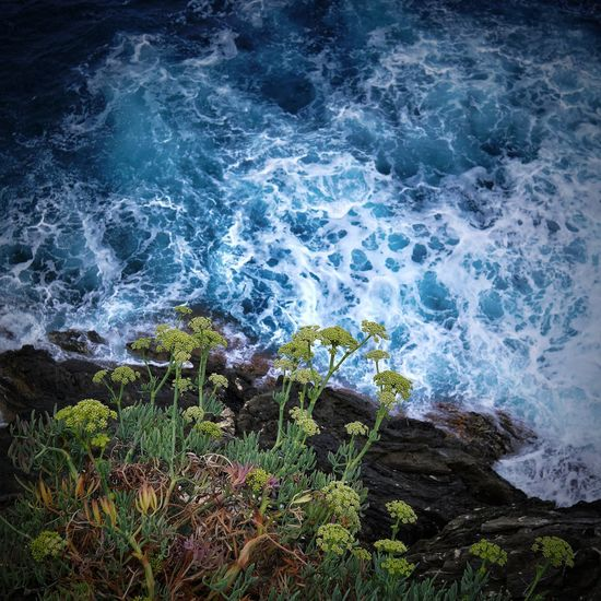 cliff Leaves🌿 Flower Water Wave Power In Nature Sea High Angle View Rippled Close-up Horizon Over Water