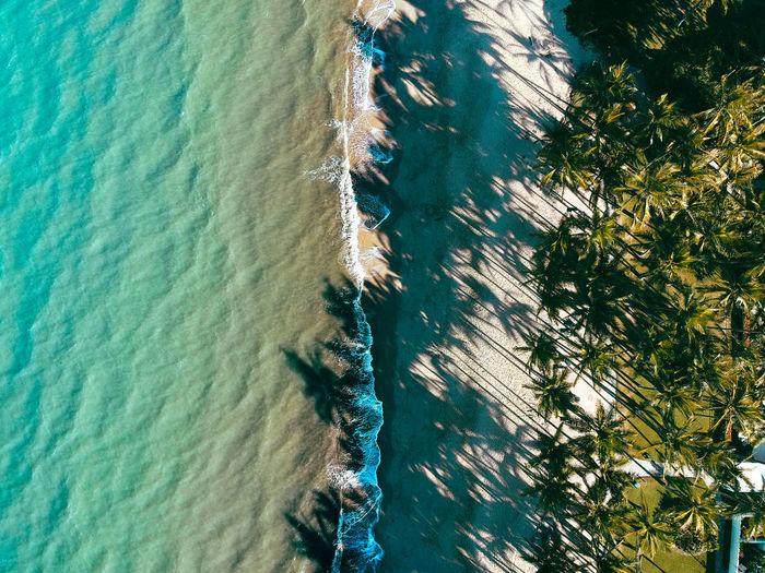 High angle view of plant on sea