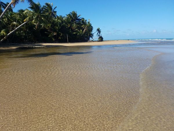 Beach Beauty In Nature Blue Day Horizon Over Water Nature No People Outdoors Palm Tree River Sand Scenics Sea Sky Sunlight Tranquil Scene Tranquility Tree Water Samsung Galaxy S7 Low Angle View Puerto Rico River Mouth River View Check This Out