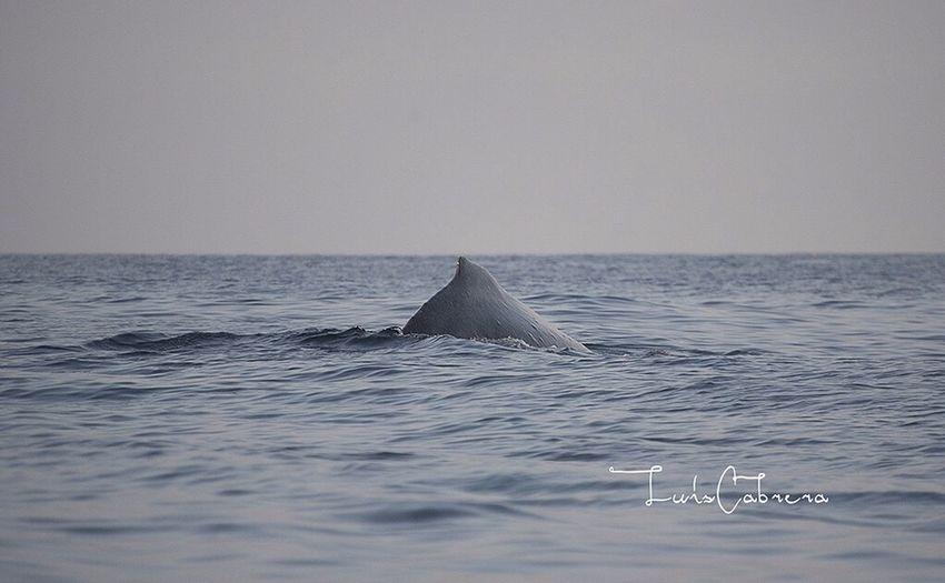Sea Sea And Sky Seascape Humpback Whale Seaphotography Mar Mexico Ballenas Jorobadas Fotografia
