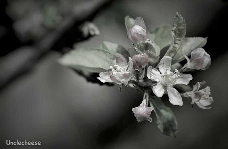 🍏 Apple